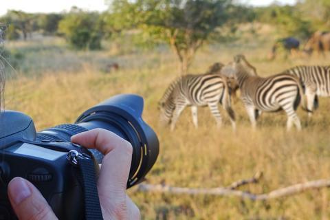 photo safari camera zebra