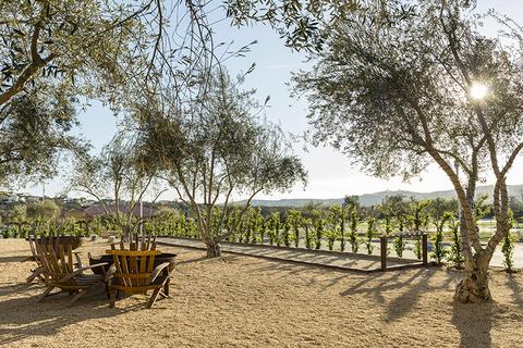 Allegretto Vineyard Resort vineyard