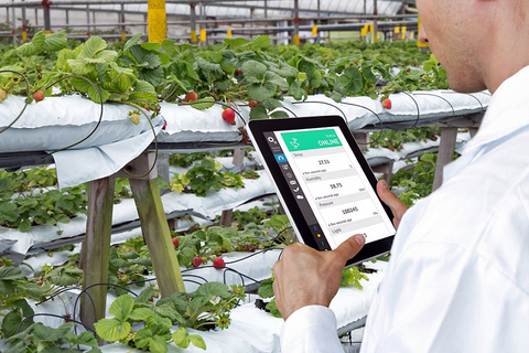 A farmer analyzes his crops with wireless technology, checking on his physical sensors, which indicate necessary information like humidity, temperature, pressure and flow.