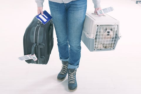 man traveling with a suitcase and dog in crate at airport