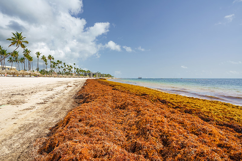 Sargassum in Punta Cana, Dominican Republic