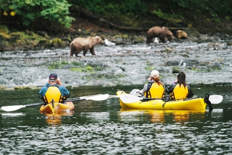 UnCruise Adventures Kayaks from Vessel Bear Watching Photo by Cameron Zegers Courtesy of UnCruise Editorial Use Only