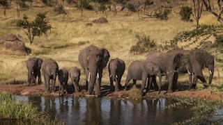 Four-Seasons-Safari-Editorial