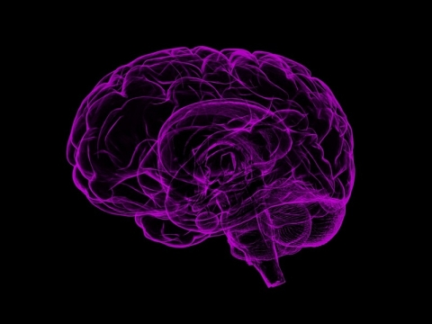 purple brain illustration on black background