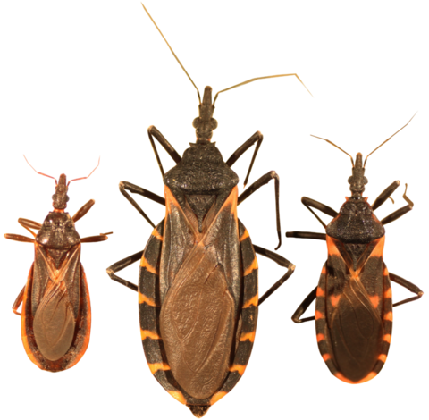 First Treatment for Chagas Disease Gets FDA Approval
