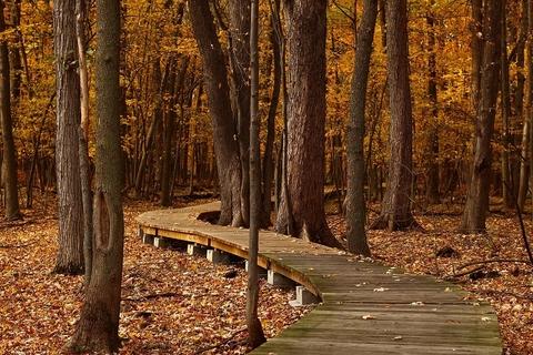 autumn (Pixabay)
