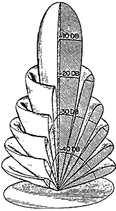Figure 7.A transducer with a circular radiating surface whose diameter is large in comparison to a wavelength produces a narrow, conical beam pattern with multiple secondary lobes.