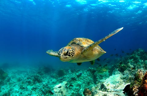 AdventureSmith Explorations Offers Galapagos Vacation Tips - Galapagos vacations