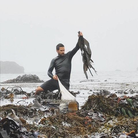 Marsh Mokhtari of Gray Whale Gin wild foraging edible kumbo sea kelp