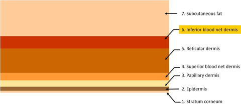 Fig. 2: This is a seven-layer skin model. The first and outermost layer is the Stratum corneum and the innermost layer is the subcutaneous adipose tissue, or fat layer.