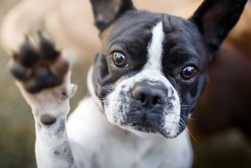 Why doctor recommends asking patients the names of their dogs