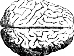 a black and white drawing of a human brain