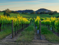 Panoramic view of Napa Valley, California