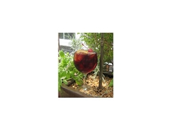 Red wine holiday sangria