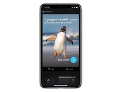 Penguin app