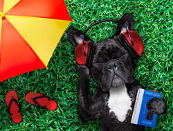 Dog listening to summer music