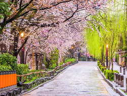 Kyoto, Japan Cherry Blossom