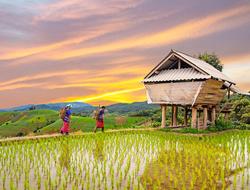 Thailand Avanti