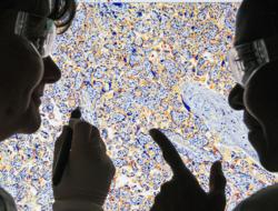 Investigation of protein expression (Image: AstraZeneca)