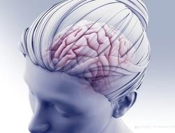head and brain