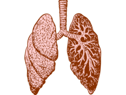 Lungs illustration (Image: Pixabay)