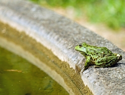 frog on a fountain