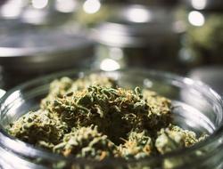 Marijuana buds in a jar