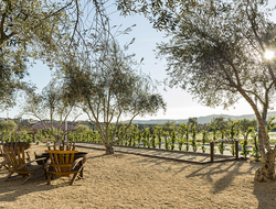 Allegretto Vineyard Resort vineyard