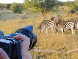 photo safari camera zebra