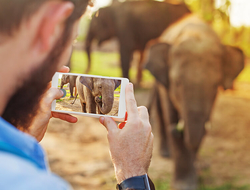 man taking a photo of an elephant
