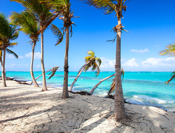 Palm trees on Shoal Bay beach in Anguilla