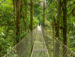 A hanging bridge in the rainforest of Monteverde, Costa Rica