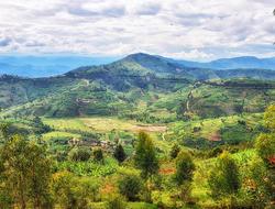 Nyungwe National Park, Rwanda