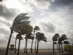 Palm trees being blown over by a hurricane