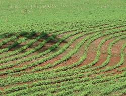 agriculture (Pixabay)