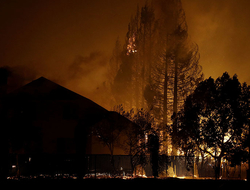 Trees burn behind houses in a residential area in Santa Rosa, CA