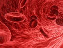 illustration of red blood cells in blood vessel