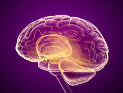 3D brain against purple background
