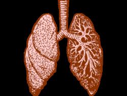 Lungs illustration (Image: Pixabay)
