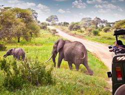 A safari at the Maasai Mara Game Reserve in Kenya