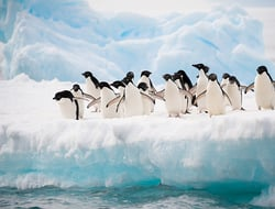 penguins Antarctica