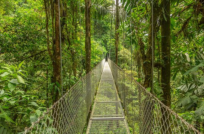 A hanging bridge in the rainforest of Monteverde, Costa Rica