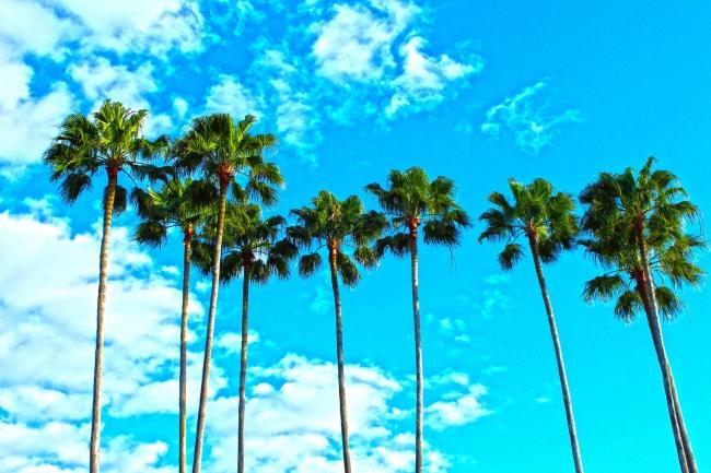 Palm trees set against blue sky